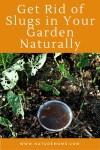 Get Rid of Slugs in Your Garden Naturally