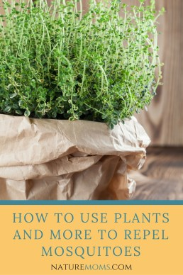 Use Plants to Repel Mosquitoes