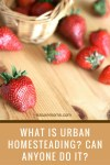 What is Urban Homesteading? Can Anyone Do It?
