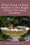 What Kind of Bird Feeder is the Right  Choice for Your Garden?