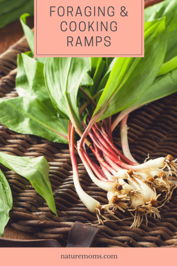 Foraging and Cooking Ramps