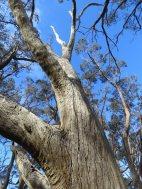 dead tree-001