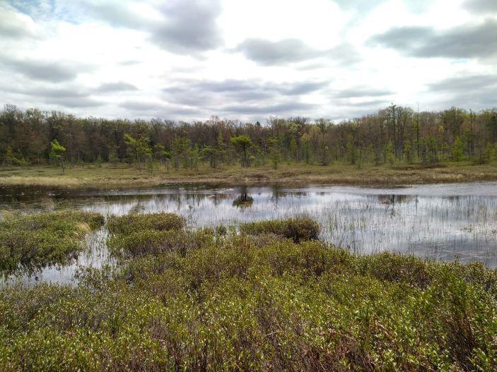 Richmond Woods Nature Preserve