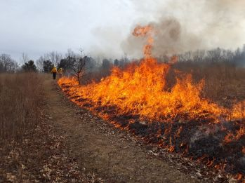 Fall prescribed fire at Saul Lake Bog Nature Preserve