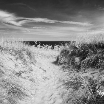 Dunescape, Saugatuck Dunes State Park by Thomas Hegewald