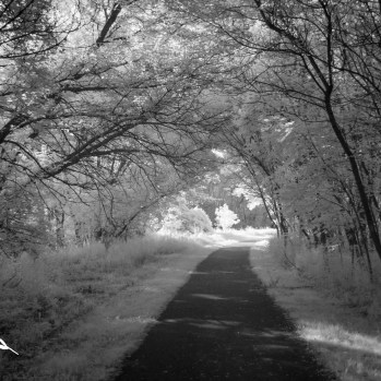 Tree-Lined Path, Roselle Park by Thomas Hegewald
