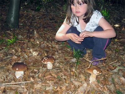 Ele with ceps