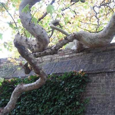 Emmanuel college wall damage