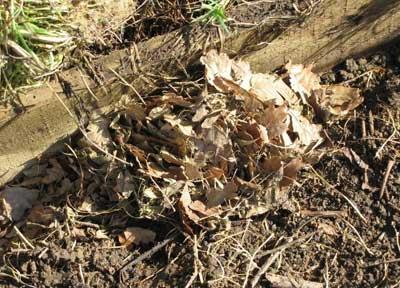 Field mouse nest