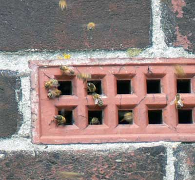 Bees at County Hall