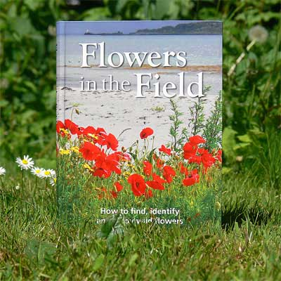 Flowers in the Field, Faith Anstey