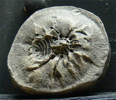 Fossil spider cast, Genesis Expo