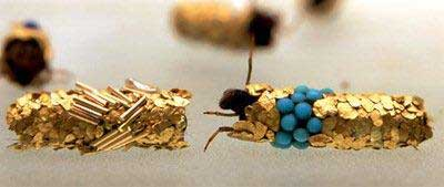 Golden caddis fly larvae Photos Jean-Luc Fournier. Courtesy Art:concept, Paris, and Zero Gallery, Milan.
