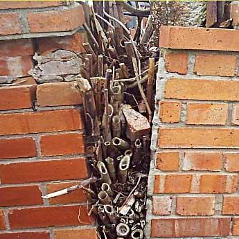 Knotweed in brickwork © IVM Ltd