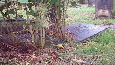 Knotweed on graves © IVM Ltd