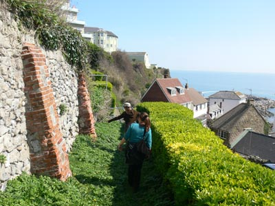 Searching for wall lizards, Ventnor