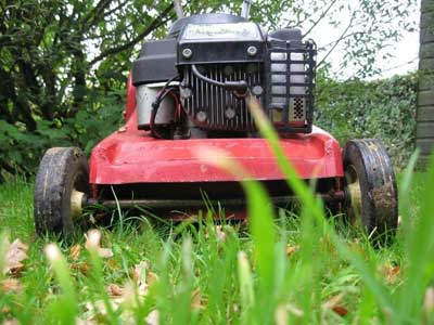 Mower: toad view