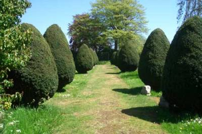 Yew trees, Newport Cemetery