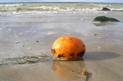 An orange contaminated with fuel oil, Fort Victoria Country Park