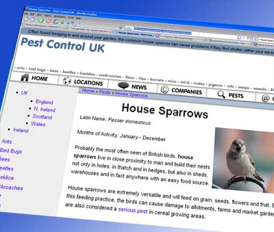 House sparrow on the pest control UK website