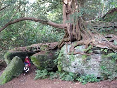 Spooky trees: Wakehurst Place