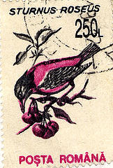 A stamp with a picture of a Rose-coloured starling, credit kristykay22