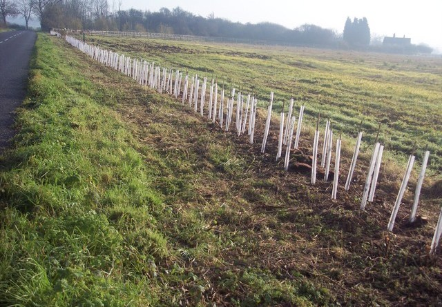 Hedge planting image from NEN gallery