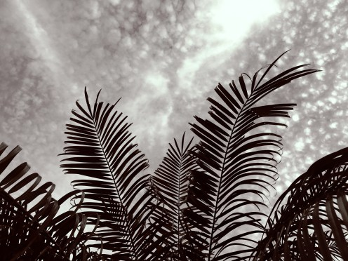 Palm against sky