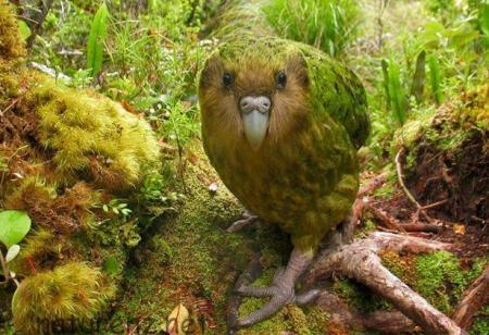 """ニュージーランドの""""飛べない鳥""""全5種類を写真で紹介。世界でここだけのユニークな鳥たち"""