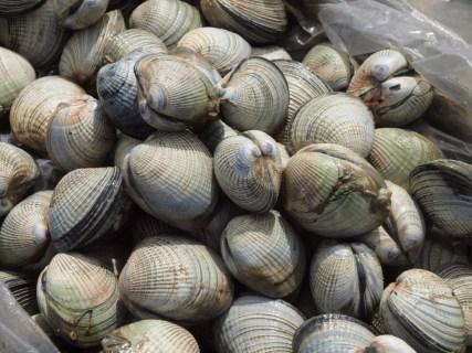 ニュージーランドで潮干狩り&貝殻ひろい。覚えておきたい貝の名前と見分け方