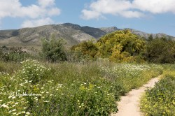 Wild flowers in Andalucia
