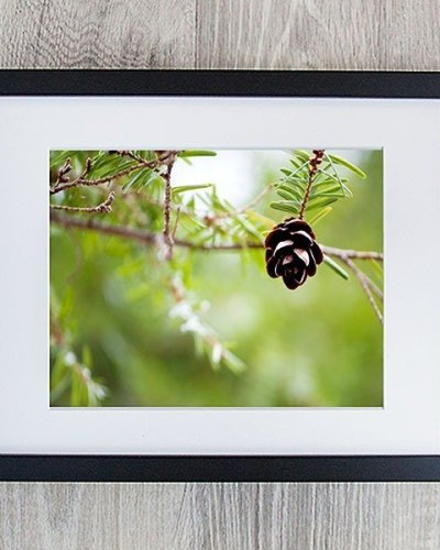 baby pinecone photo in modern black frame amsw photography