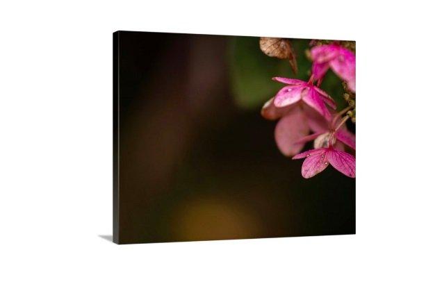 canvas of a dark pink hydrangea