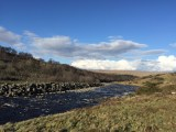 The River Tees