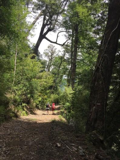 Pretty decent trail going through Huilo-huilo