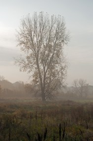 green-lake-foggy-treedsc_0004