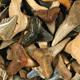 fossilized-shark-teeth-crystal-image
