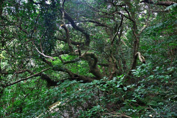 深い森が続く