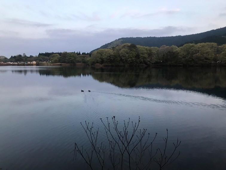 カモが優雅に泳ぐ田貫湖