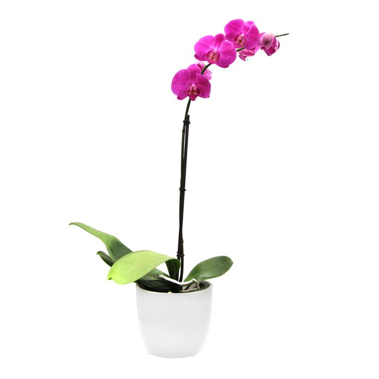 Indoor Plants Edible