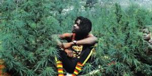 jamaica marijuana laws