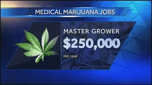 marijuana related jobs
