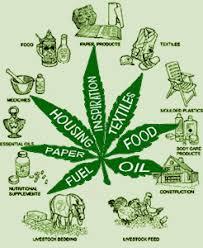 Recreation Marijuana Use