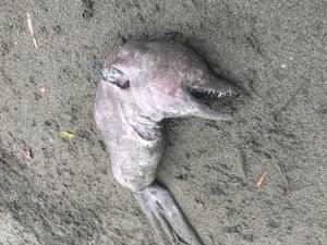 washedupdolphin