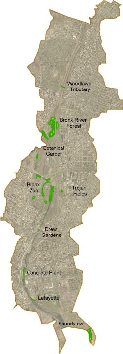Bronx Wetlands