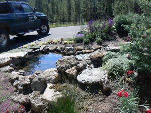 Types of Xeriscaping