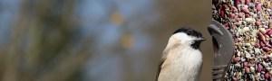 Photo of a bird at a tube feeder.
