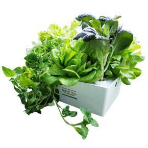 ערכת הידרו לגידול 5 צמחים במחיר זול