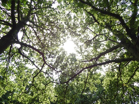 Light through tree canopy