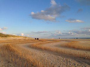 Wadden Tide, Woodland, Blåvandshuk 2014